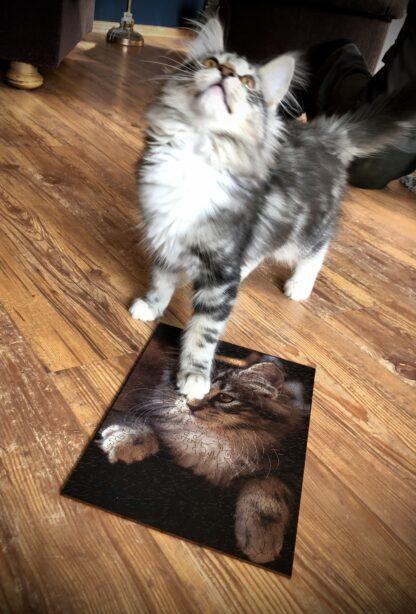 Ragnar Holzpuzzle mit Katze daneben